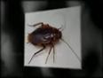 spider boss video
