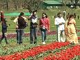 tulip video