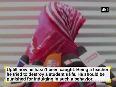 thakkar video