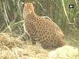 shatipur video