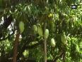 madhya pradesh video