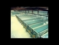 hydras video