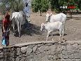 oiaaf video