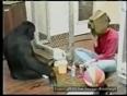 sai trust video
