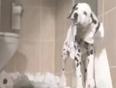 hush puppies video