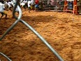 jallikattu  video