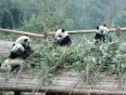 chengdu video