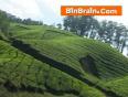 greenland video