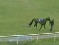 crazy horse video
