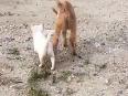 puppy video