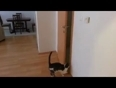 cat video