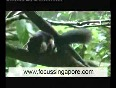 singapore zoo video