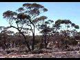 tourism australia video