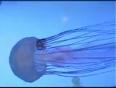 aquatics video