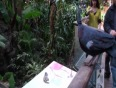bird park video