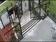 parkal video