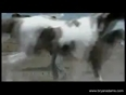bryan adams video