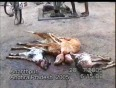 people for ethical treatment of animals video