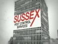 sussex video