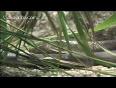 black snake video