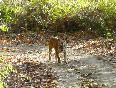 corbett national park video