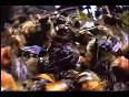 hornets video