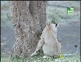 three lions video