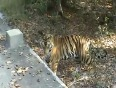 ranthambore national park video