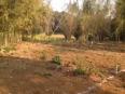nayagan video