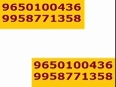9953987615 Elan Mercado FOOD Court| Gurgaon Shop RS 8250 1-9
