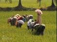 Iris Holidays- Kerala Tour Operator