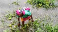UP farmers hit hard after flood water submerged fields