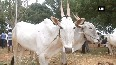 Farmers put their cattle for sale due to water scarcity in Karnataka s Hubli