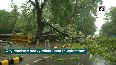 Trees uprooted in Delhi after downpour