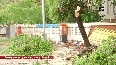 Trees uprooted in Mumbai due to incessant rainfall.mp4