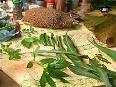 Ayurveda practitioners cultivate herbal gardens in Tripura