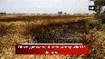 Fire destroys over 6 acres of wheat crop in Haryanas Karnal