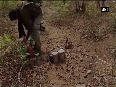 Jharkhand Police, CRPF recover huge cache of explosives from Naxal hideout
