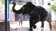Elephant owner in Madurai suffers due to lockdown