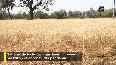 Farmers incur losses in MP amid COVID-19 lockdown