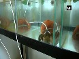 Czech brewery uses crayfish equipped with infrared sensors to control water purity