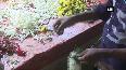 Price of jasmine surges due to incessant rains in Madurai