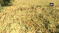 Phethai cyclone damages crops in AP