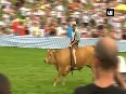 Watch Thousands gather for traditional ox racing