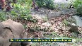 Elephant with bullet wound found dead in Odisha