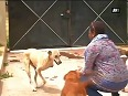 Amidst animal cruelty, meet woman with 43 dogs