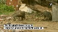 Govt health centre in Madhubani village used as cow shelter