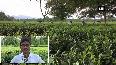 Joint forum of tea trade union demands intervention of Nirmala Sitharaman, Mamata Banerjee