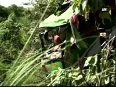 Four killed, 51 injured as bus falls in gorge