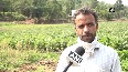 'Jeevika' benefits Udhampur farmers by doubling their income